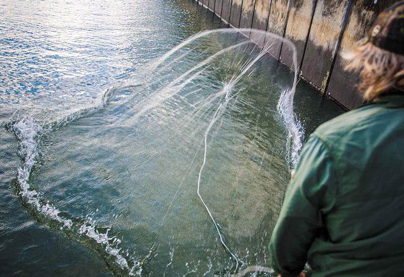 Throwing a Bait Cast Net Cairns Inlet