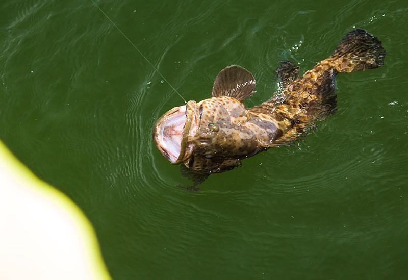 Estaury Cod Fishing