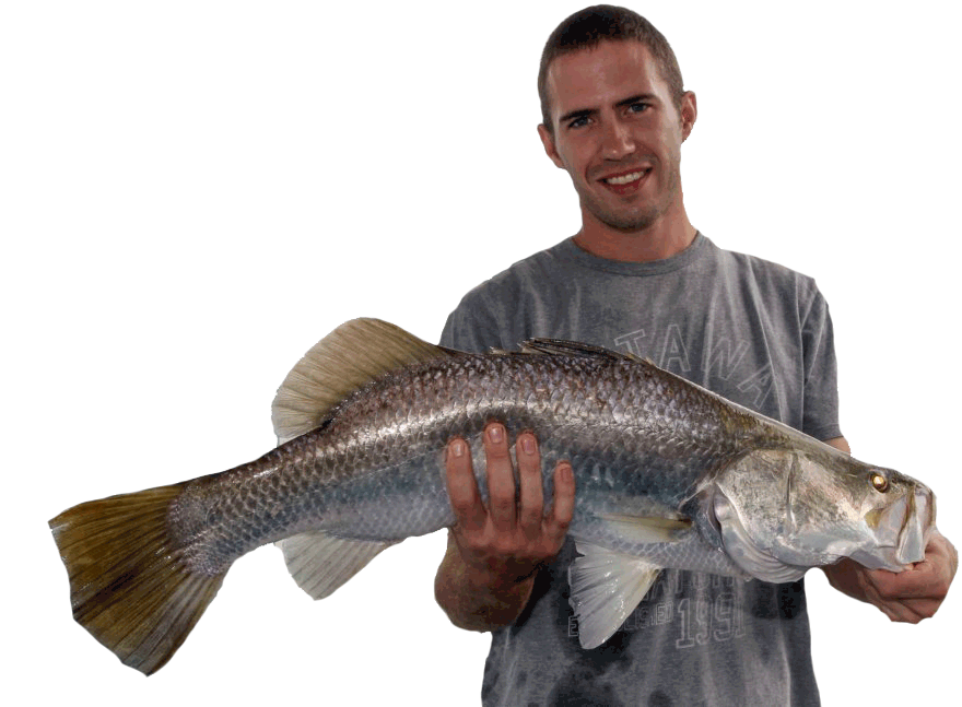 Big Barramundi